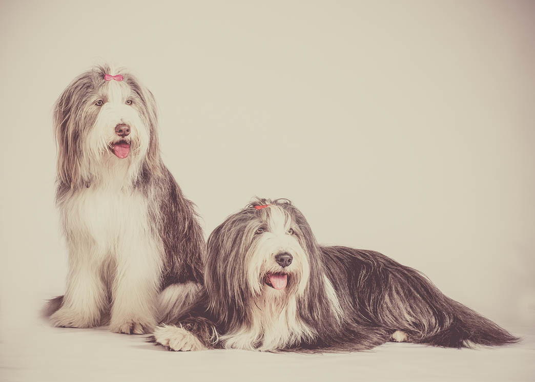 Hundeshooting von Ira Ingenpaß Fotografin im Nordpark Mönchengladbach