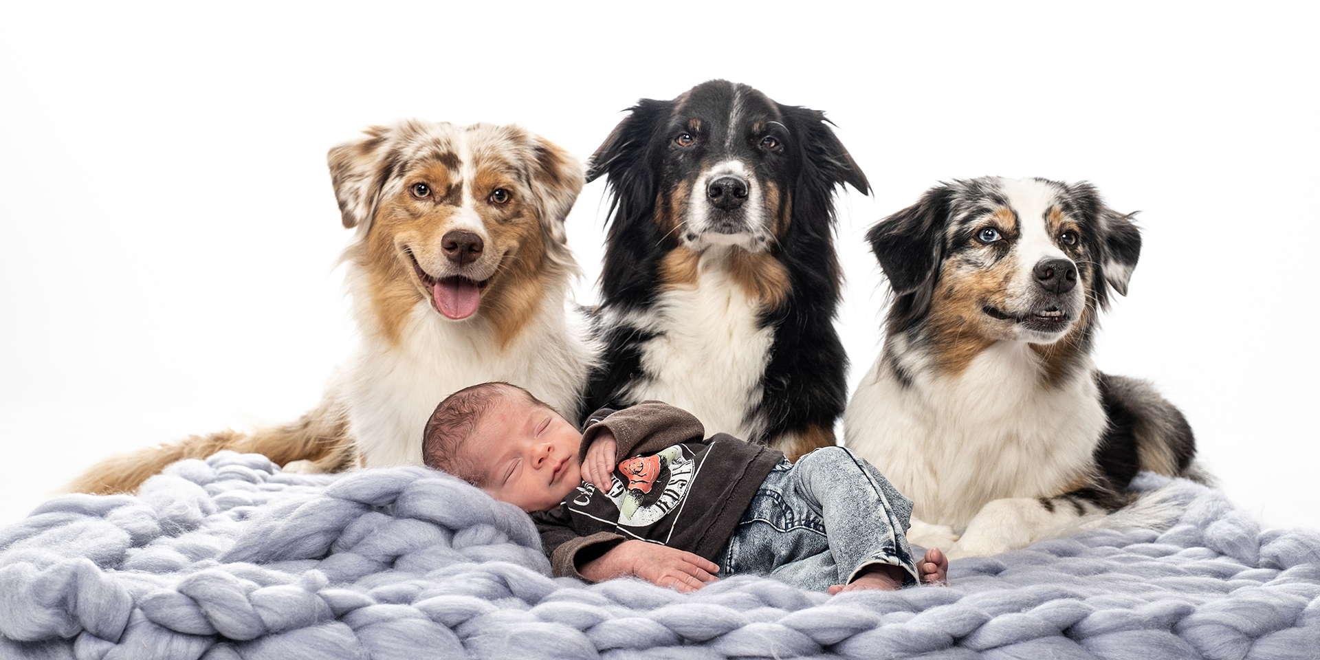 drei-hunde-mit-schlafendem-baby-im-fotostudio1